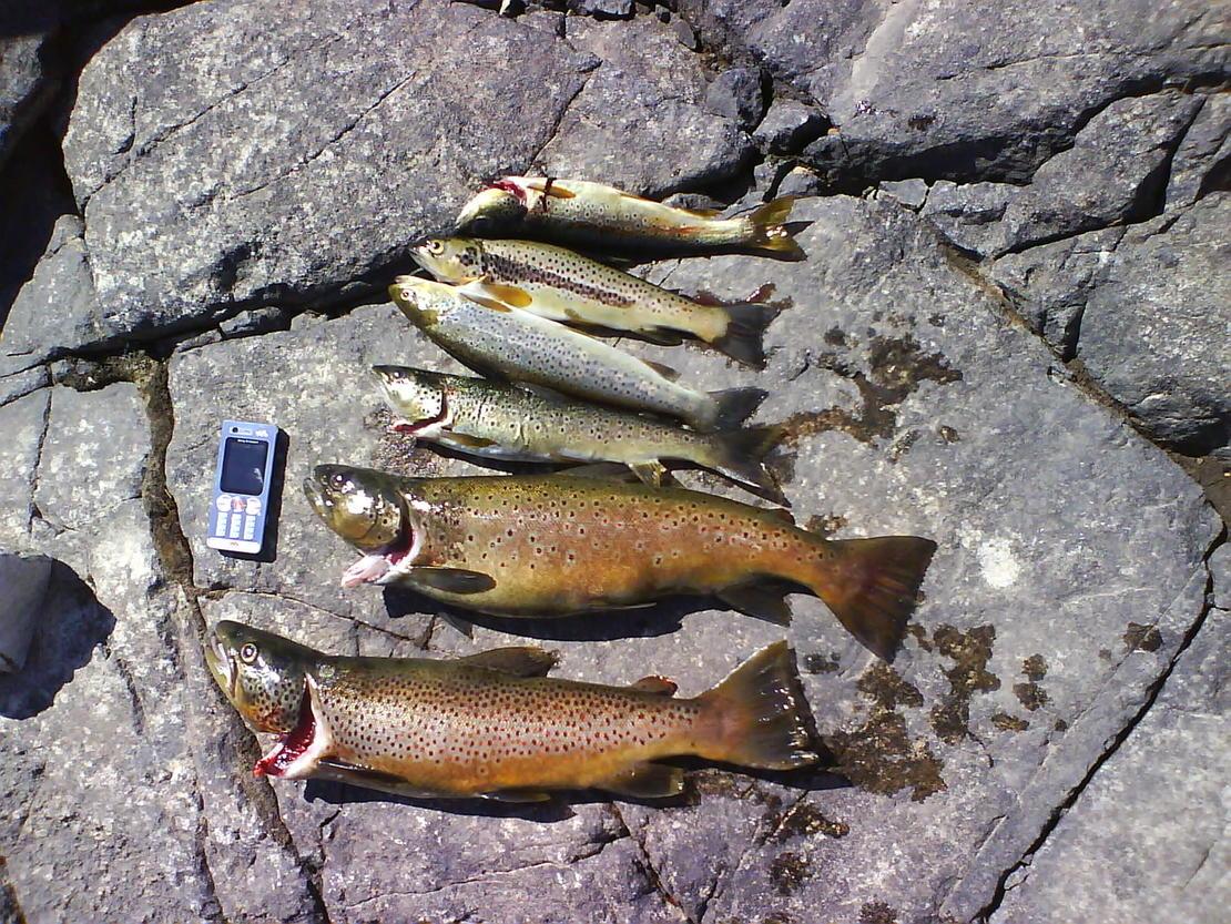 Fiskefangst
